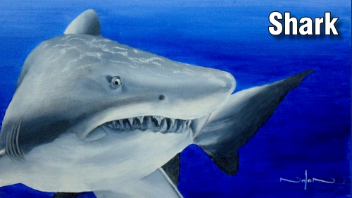 how to paint a shark fish