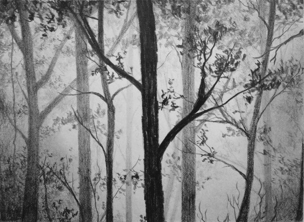 how to draw a forest in pencil
