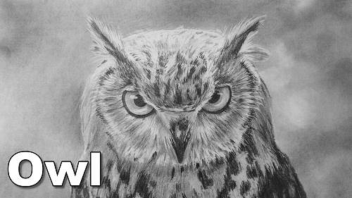 how to draw an owl birds